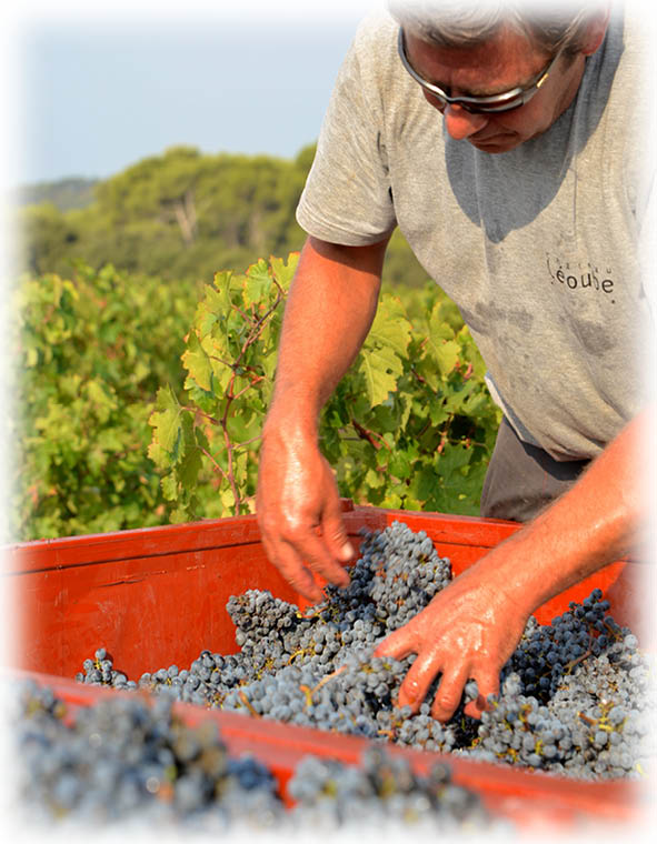 récolte vendanges 2018